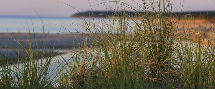 Warm Tone Coastal Beach Landscape